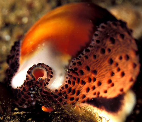 Cowrie_1210_050