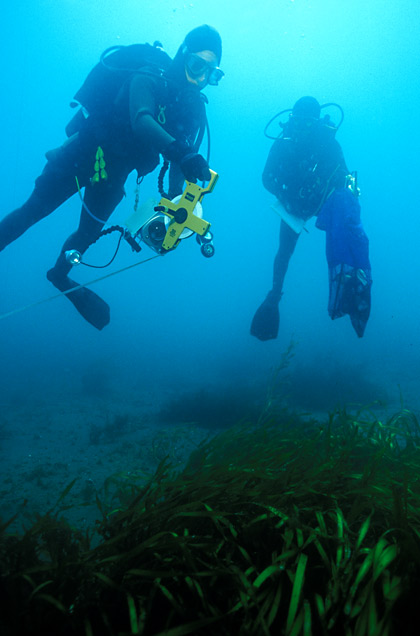 Divers with Transect Tape